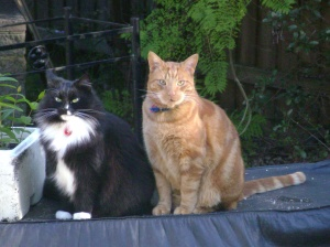 Who us? We were just sitting here, on the BBQ. Innocently.