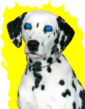 ultimate-dalmation[1]