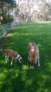dogs-on-grass