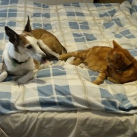 Elvie and Hermie on bed